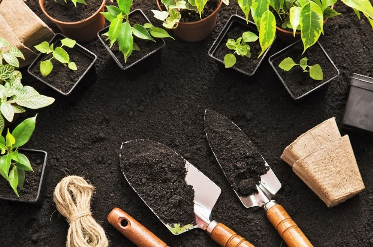 Organic Soil Amendments for Growing Vegetables
