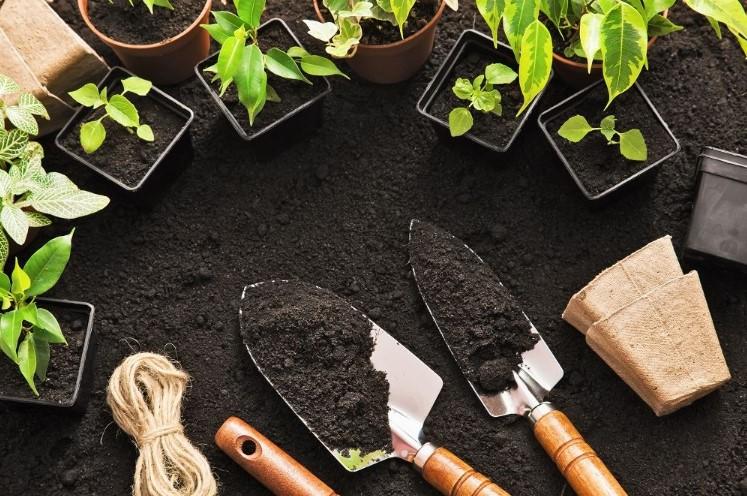 Organic Soil Amendments for Growing Vegetables