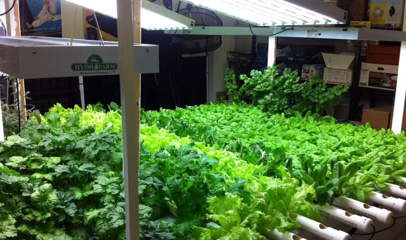 How to Set up an Indoor Vegetable Garden?
